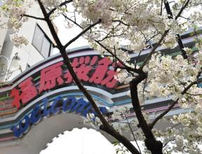 神戸福原ソープ街の歩き方 「福原桜筋」ソープランド紹介。