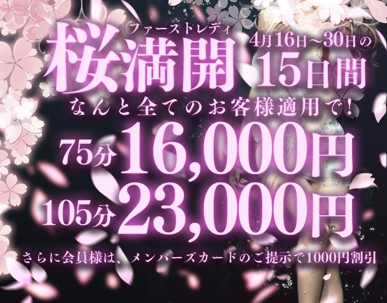 神戸福原の桜は今が満開なのです!!